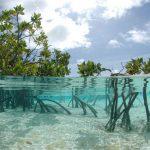 Bahamas: Paradies für Spieler und Taucher